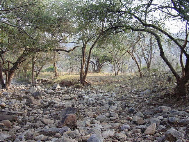 Sariska India  city photos : SARISKA INDIA Holiday Destinations Online travel guide and ideas